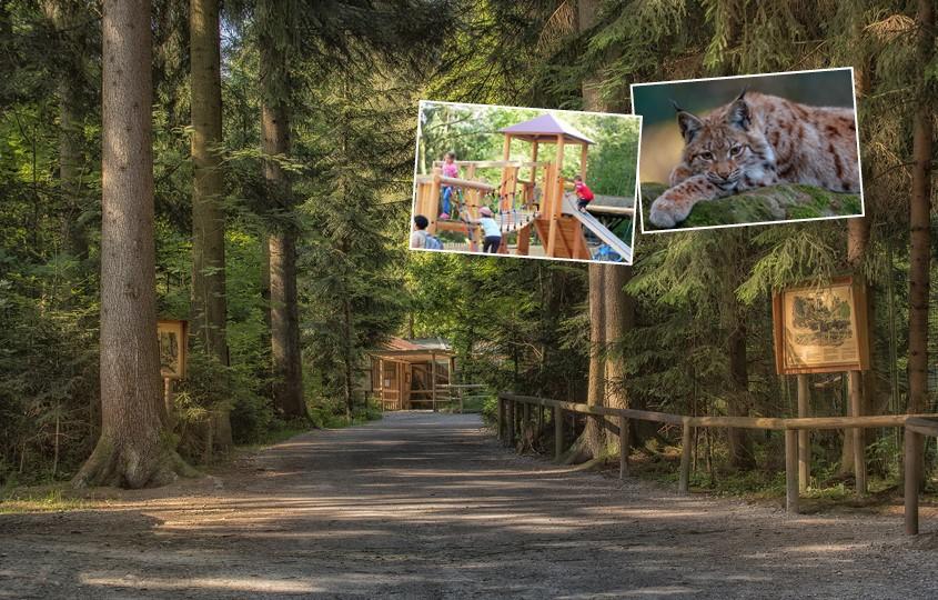 Waldweg Lohberg